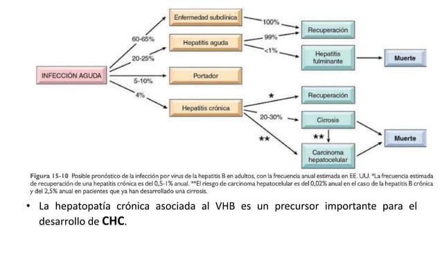 Estructura y genoma  • Hepadnaviridae (producen hepatitis en muchas especies animales)  • Molecula de DNA circular, doble ...
