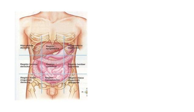 DEFINICIÓN  • Inflamación o necrosis del parénquima hepático, de evolución aguda, subaguda o crónica.  TRASTORNOS  INMUNOL...