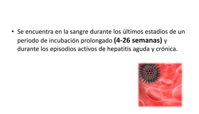 Después de que usted resulte infectado por primera vez con el virus de la hepatitis B:  • Puede que no tenga ningún síntom...