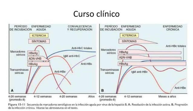 VIRUS DE LA HEPATITIS E  • Virus de ADN de hebra única no encapsulado.  • Calicivirus  • VHE-Ag se identifica en el citopl...