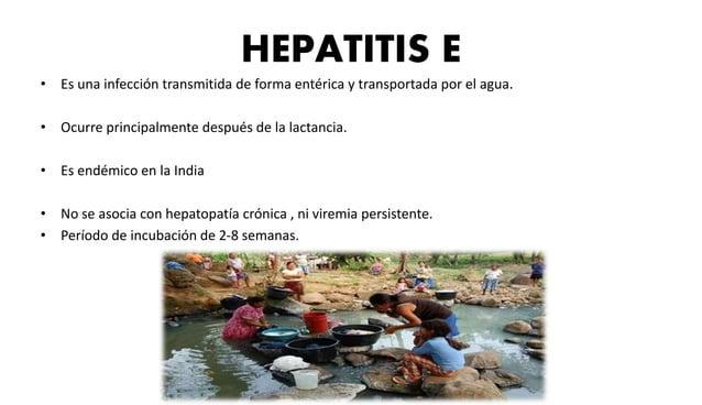 La característica de la hepatopatía crónica grave es la  cicatrización  • Al principio solo se reconoce fibrosis en los es...