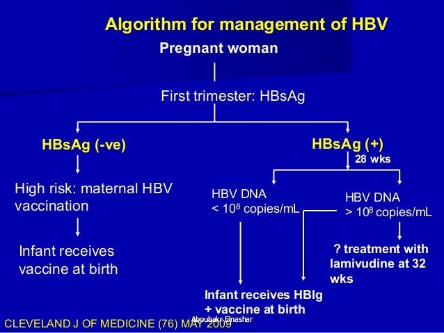 Image result for hepatitis B during pregnancy