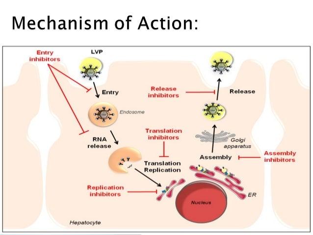 Interferon And Ribavirin Rash