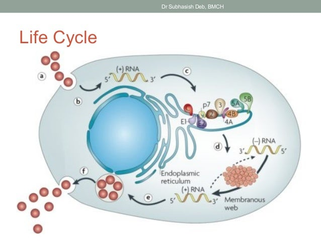 ebook Advances in Enzymology and Related