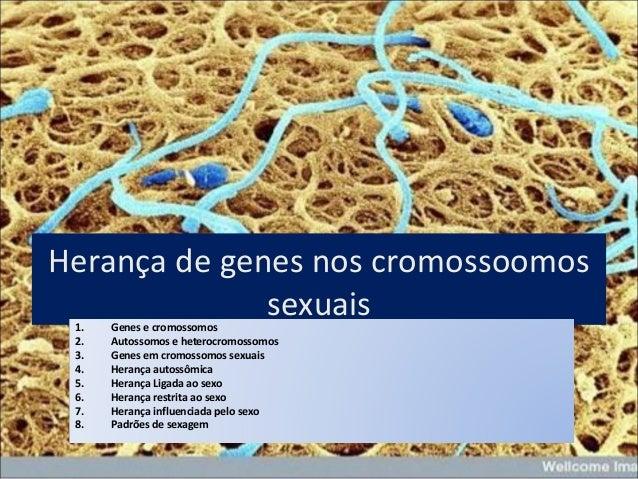 Herança de genes nos cromossoomos sexuais1. Genes e cromossomos 2. Autossomos e heterocromossomos 3. Genes em cromossomos ...
