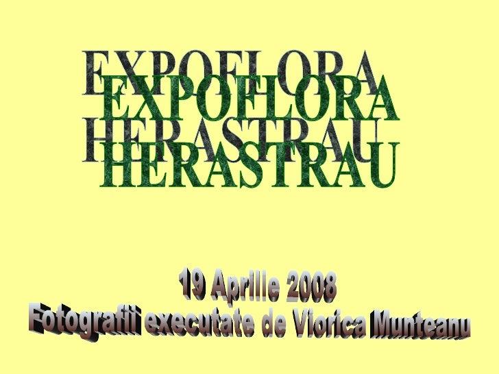EXPOFLORA HERASTRAU 19 Aprilie 2008 Fotografii executate de Viorica Munteanu