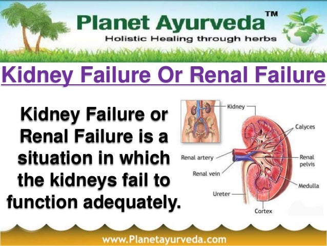 Kidney Failure Or Renal FailureKidney Failure orRenal Failure is asituation in whichthe kidneys fail tofunction adequately.