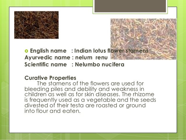 Herbal plant presentation 24 english name indian lotus flower mightylinksfo