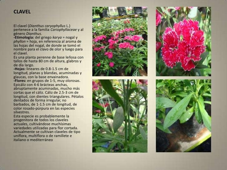 Herbario - Todo sobre jardineria ...