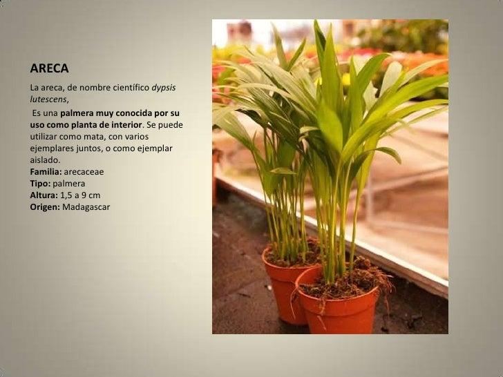Herbario - Clases de flores y sus nombres ...