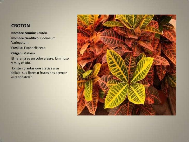 Herbario for Plantas ornamentales croto