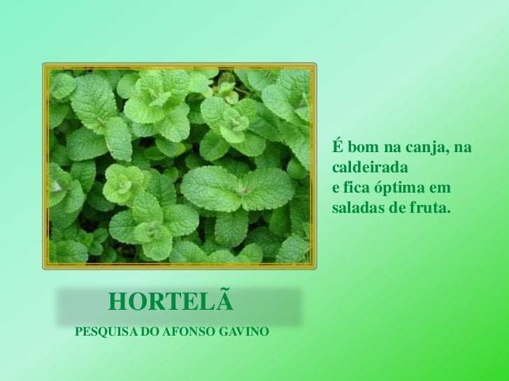À DESCOBERTA DAS PLANTAS AROMÁTICAS  Slide 2