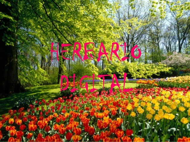 HERBARIODIGITAL