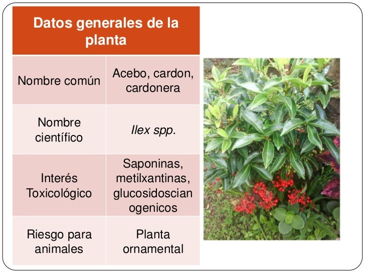 Herbario digitalis for 5 nombres de plantas ornamentales
