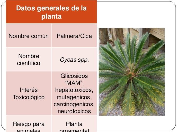 Herbario digitalis for Planta ornamental helecho nombre cientifico