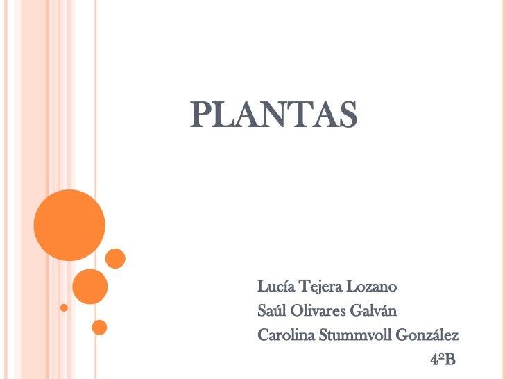 PLANTAS  Lucía Tejera Lozano  Saúl Olivares Galván  Carolina Stummvoll González                         4ºB