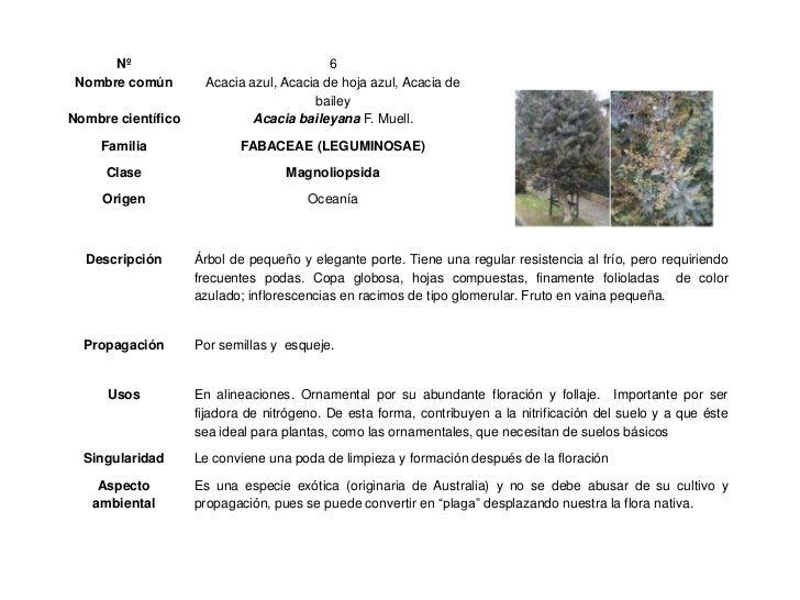 Herbario escolar 2012 for Tipos de arboles y caracteristicas