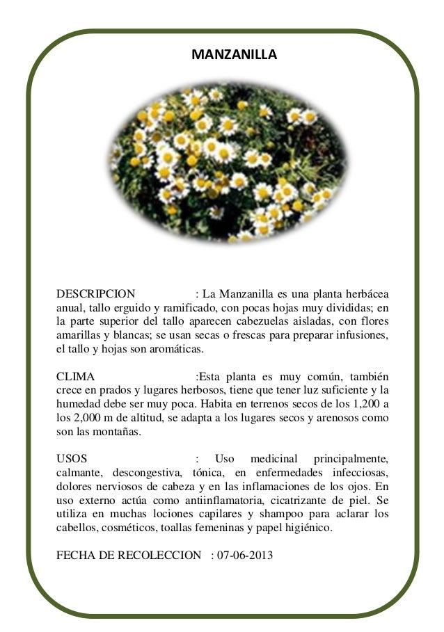 NOMBRE CIENTIFICO : CHAMAEMELUM NOBILEDESCRIPCION : La Manzanilla es una planta herbáceaanual, tallo erguido y ramificado,...