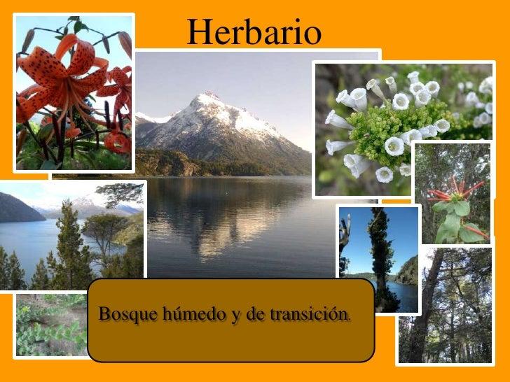 HerbarioBosque húmedo y de transición.