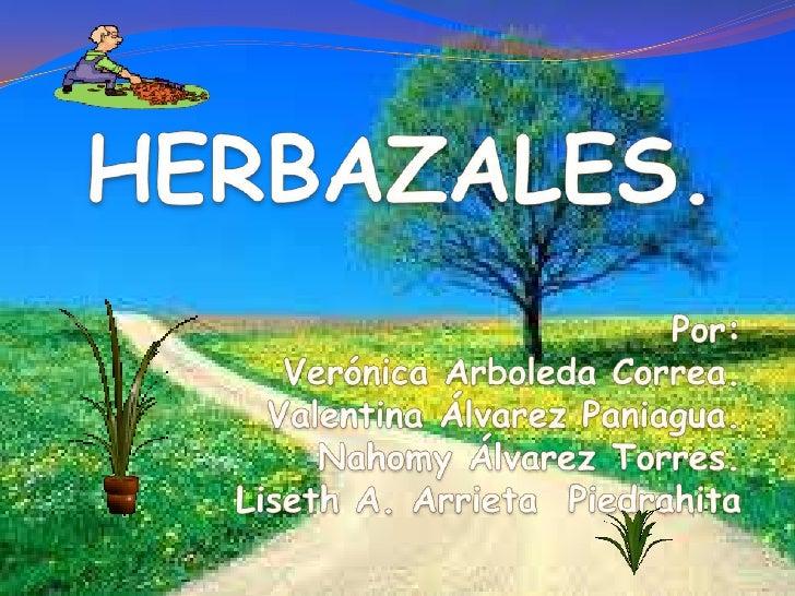 Bajo el nombre de herbazales seagrupan     cuatro     clases     devegetación ubicadas alrededor delagunas o en zonas de i...