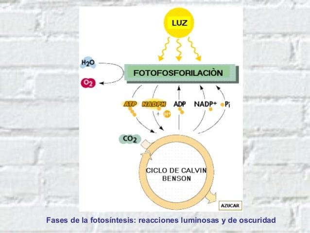 Toxicocinética • Piel • Respiratorio • Digestiva • V ½ 5 horas • No se une a prot. Plasm. • Se distribuye a: – Riñón – Híg...