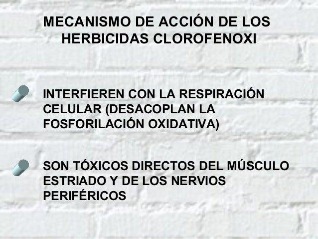 TRATAMIENTO DE LAS INTOXICACIONES AGUDAS POR HERBICIDAS CLOROFENOXI (Cont.) NO EXISTE ANTÍDOTO ESPECÍFICO TRATAMIENTO SINT...