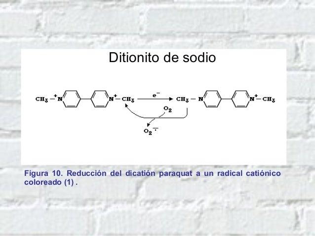 Fases de la fotosíntesis: reacciones luminosas y de oscuridad