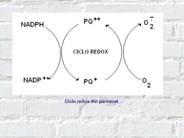 Usos del paraquat • La presentación comercial es bajo la forma de líquido concentrado (Gramoxone al 20%) • Es un herbicida...