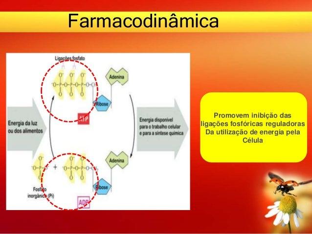 Farmacodinâmica Promovem inibição das ligações fosfóricas reguladoras Da utilização de energia pela Célula