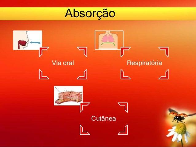 Absorção Via oral Respiratória Cutânea