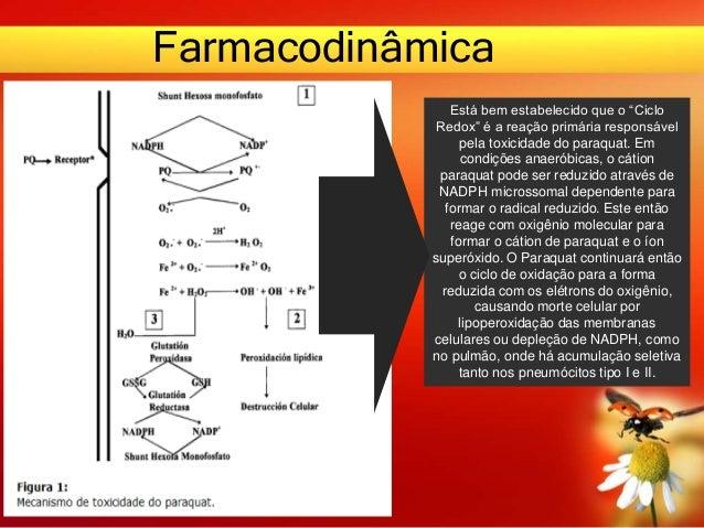 """Farmacodinâmica Está bem estabelecido que o """"Ciclo Redox"""" é a reação primária responsável pela toxicidade do paraquat. Em ..."""