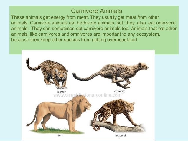 Carnivore examples gallery example of resume for student.