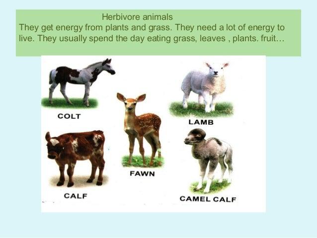 herbivore, carnivore and omnivore animals