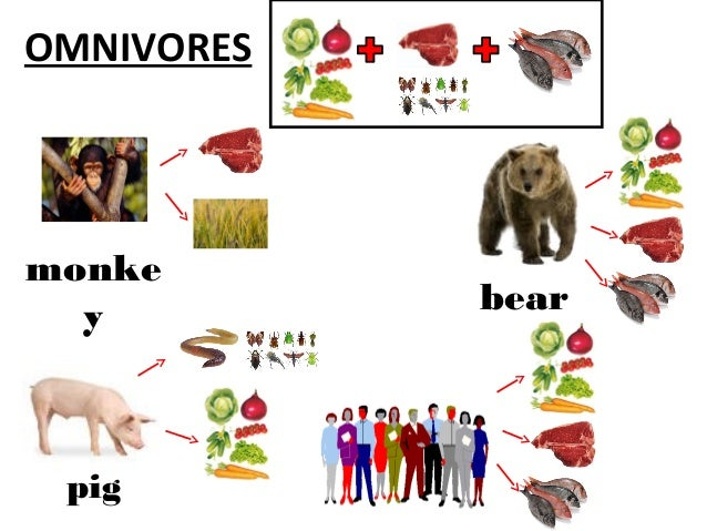herbivores  carnivores and omnivores Cow Clip Art Elephant Clip Art