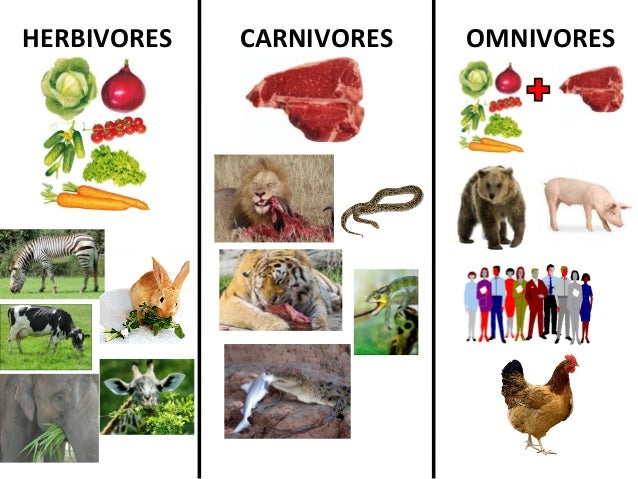 herbivorescarnivores and omnivores