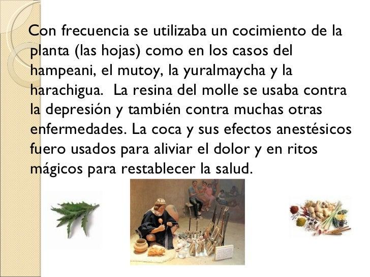 Los parásitos sobre las orquídeas falenopsis la foto