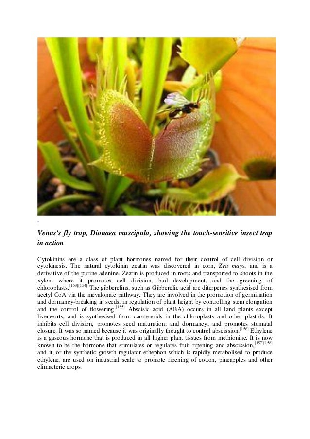 Common Herbal Plants, Dr. L.T.M. Muungo