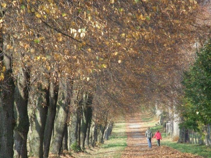 Herbststimmung Slide 3