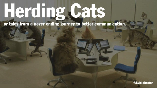 Video Hurding Cats