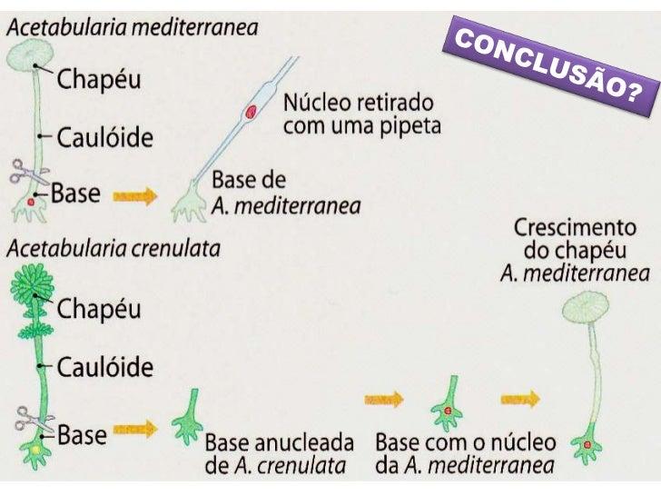 Onde se localiza o material             genético?                            Representação esquemática                    ...