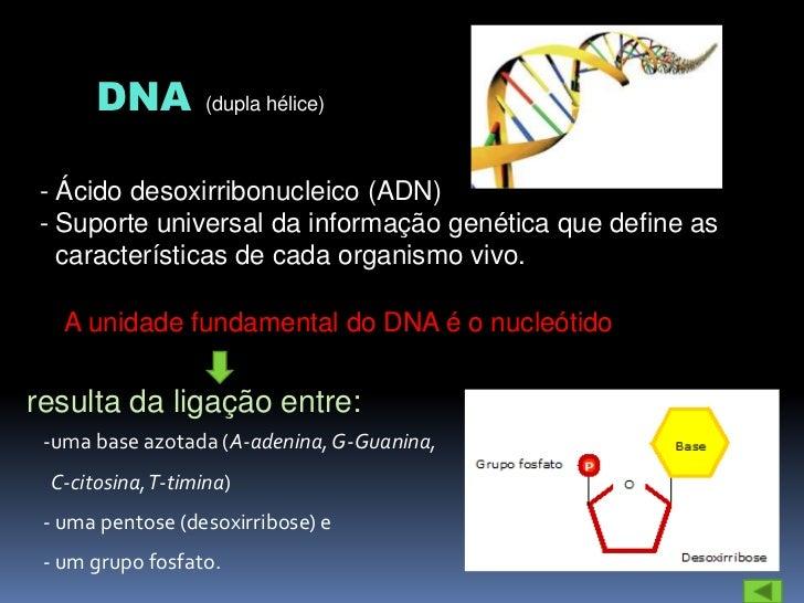 GENE Segmento de DNA (conjunto de letras numa ordem específica) que codifica a síntese de proteínas que determinam as cara...