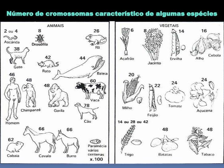 CARIÓTIPO HUMANO23 pares de cromossomas:(com diferentes formas e tamanhos) - 22 pares (cromossomas   autossómicos); - 1 pa...