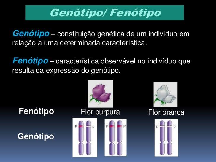 Homozigótico/ HeterozigóticoIndivíduo homozigótico – quando um indivíduoapresenta, para uma determinada característica, um...