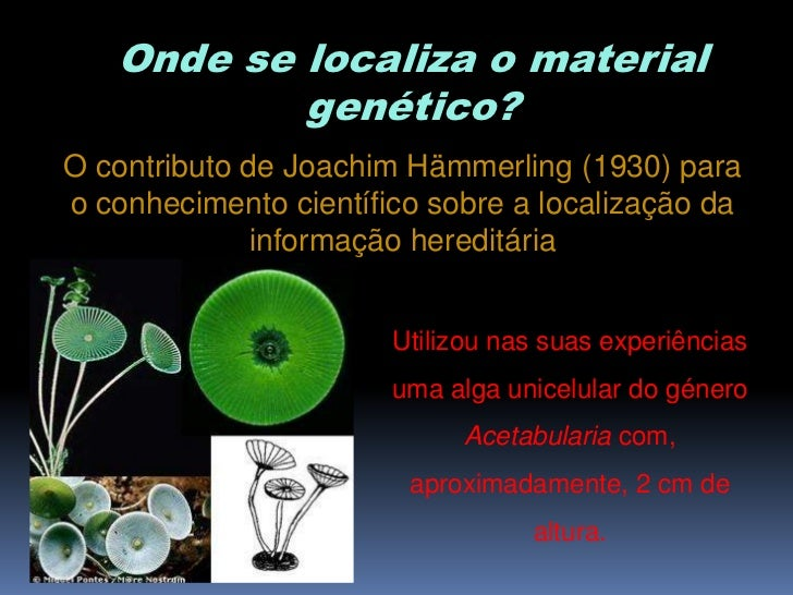 Onde se localiza o material           genético?O contributo de Joachim Hämmerling (1930) parao conhecimento científico sob...