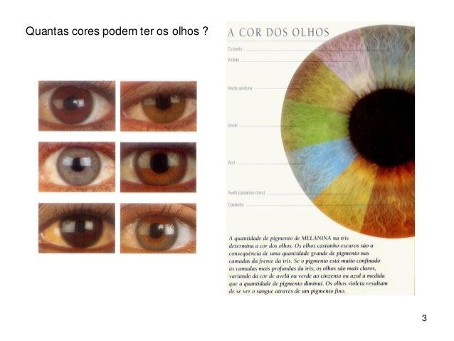 Hereditariedade da cor dos olhos Slide 3