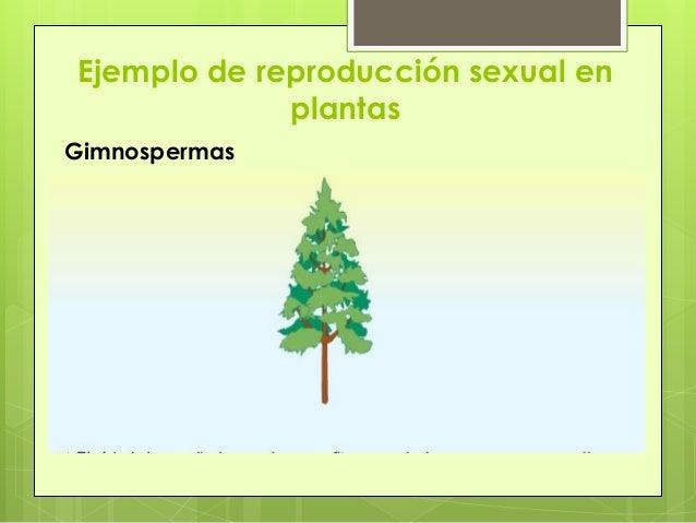 5 ejemplos de reproduccion sexual y asexual