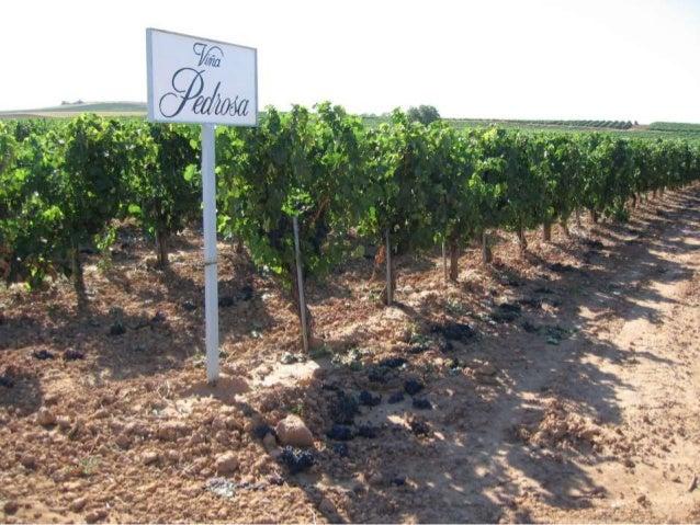 Vamos fazer uma viagem do Brasil até Ribera del Duero, a duas horas de Madri. Aí estão as vinícolas Hermanos Perez Pascuas...