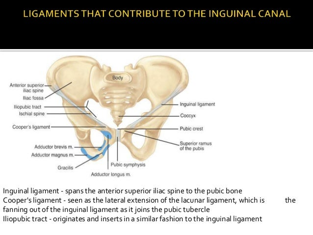 Lacunar Ligament