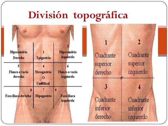 les 9 quadrants de l abdomen et leurs organes pdf