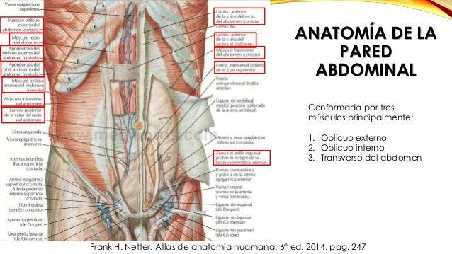 Hernias (Inguinales directas e indirectas, femorales o crurales y epi…